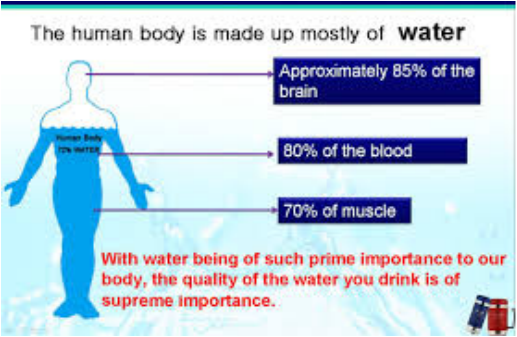 Human body and water